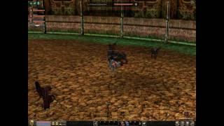 Zabijanie Z Pięści Króla w DT Metin2