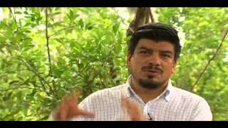 Producción Sustentable del limón mexicano en el estado de Colima, Universidad de Colima