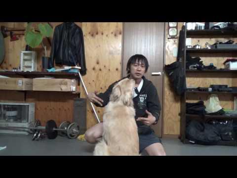 基本的な犬の叱り方:ゴールデンはこれだけでも十分だと思う