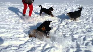 Собаки на природе март 2015(, 2015-03-06T15:25:33.000Z)