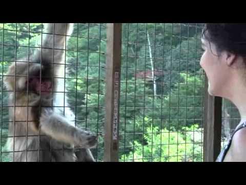 Feeding the monkeys!