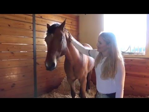 HeelsDownMedia.com - Wellington Barn Tour with Sarah Ryan owner of Sport Horse Lifestyle