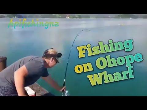 Ohope wharf fishing