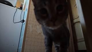 Что делает мой кот, когда остаётся один дома