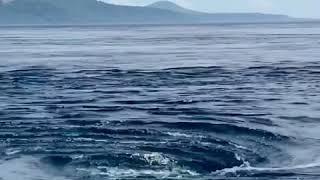 pulau alor .mulut kumbang - YouTube