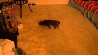 Animal Planet | Домашние животные в США | Кролик и кот