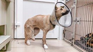 Собака застряла в разводной стрелке на жд путях Нужно помочь animal shelter saves the dog