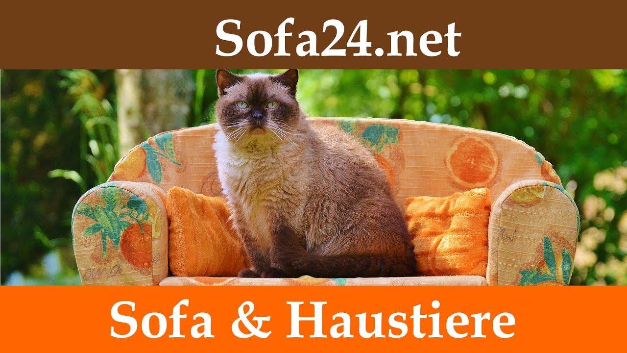 Welches Sofa Ist Bei Katzen Sinnvoll Oder Die Katze Auf Dem Sofa