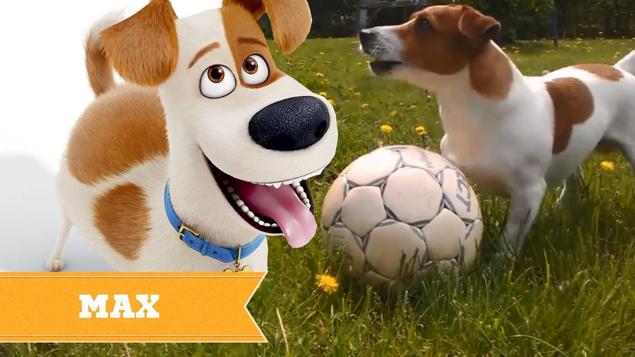 The Secret Life Of Pets Real Life All Characters Youtube