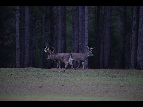 1080 Acre High Fence Deer Hunting Property