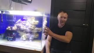 Как я хотел создать мини океанариум на краутфанденговой платформе