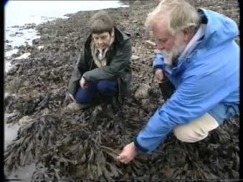 Shore ecology