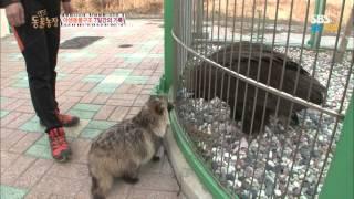 SBS [동물농장] - 야생동물 구조 7일간의 기록