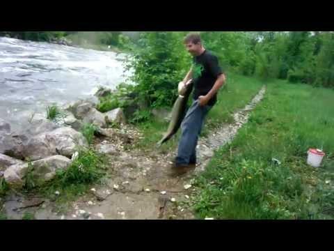 """brushy creek iowa 48"""" Muskie"""