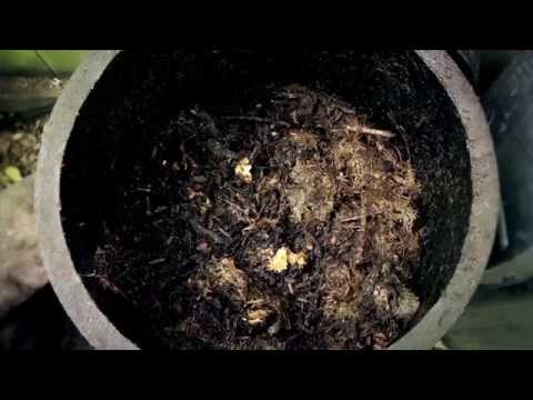 Worm farms, Bokashi bins, Hungry Bins and How to Make Cold Compost