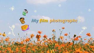 미놀타 x-700 필름사진 | 코닥골드&후지 |…
