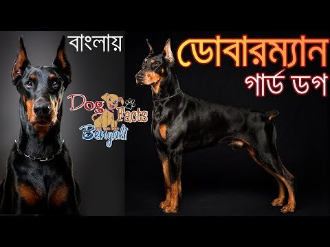 Doberman pinscher Dog Facts in Bengali | Dog Facts Bengali | Most popular dogs