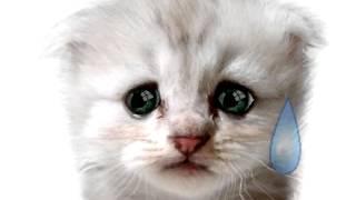 חתולים מצוירים מצחיקים