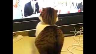 Смешной кот и телевизор