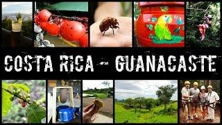🇨🇷 travel tips costa rica guanacaste pura vida 🇨🇷