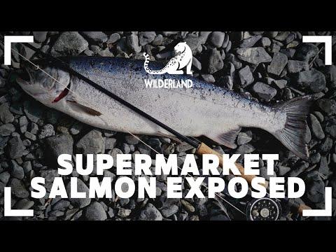 BILLION POUND FISH | Exposing The Salmon Farming Industry