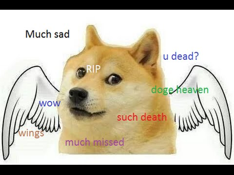 Image result for doge much dead