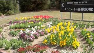 合歓の郷 チューリップ花壇