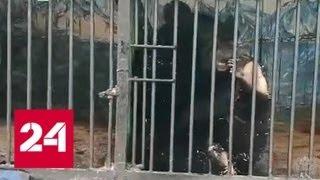 Контрабандист в клетке: попытка вывезти редких диких животных закончилась задержанием - Россия 24