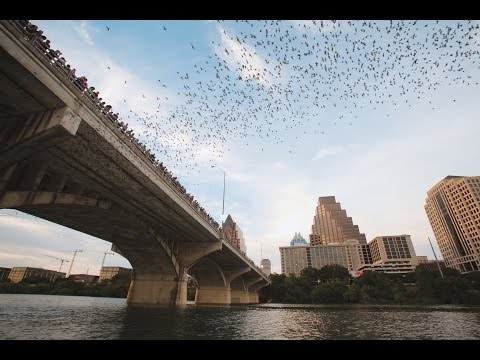 Austin's Nocturnal Neighbors: The bats of Congress Ave Bridge