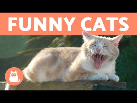 Cute Cat Video Compilation 2018