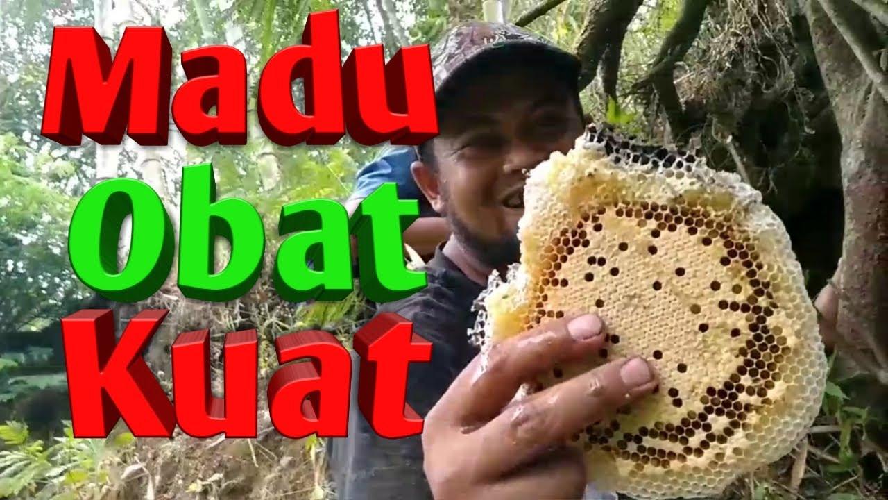 [Part II] Berburu Madu Lebah Liar Hutan Merapi | Hunting honey bee Merapi forest