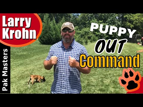 Teaching the OUT command to high drive puppies