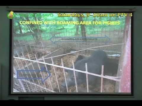 DA-BAR Free Seminar Series: Pag-aalaga ng Katutubong Baboy (Native Pigs) Part 2