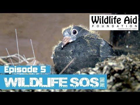 Wildlife SOS Online - Episode 5