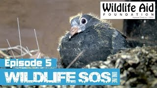 Wildlife SOS Online - Episode 5