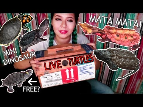 UNBOXING 5 NEW RARE EXPENSIVE EXOTIC TURTLES (SOME ENDANGERED SPECIES!)