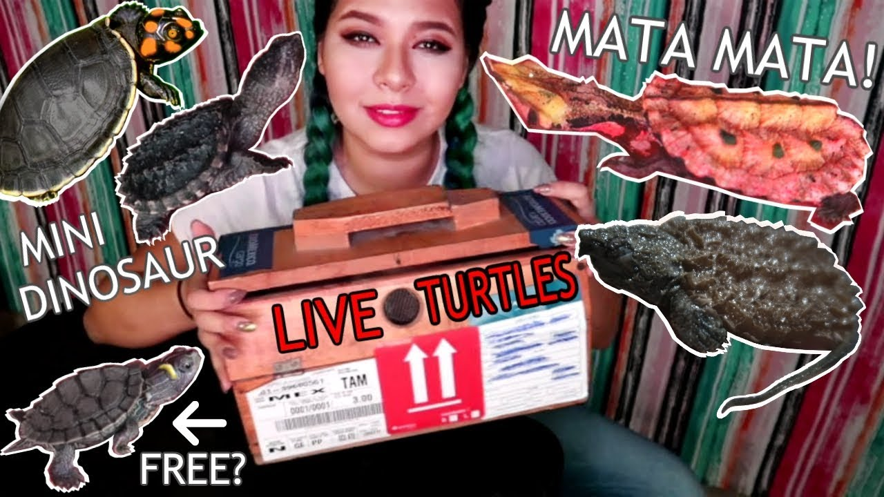 unboxing-5-new-rare-expensive-exotic-turtles-some-endangered-species