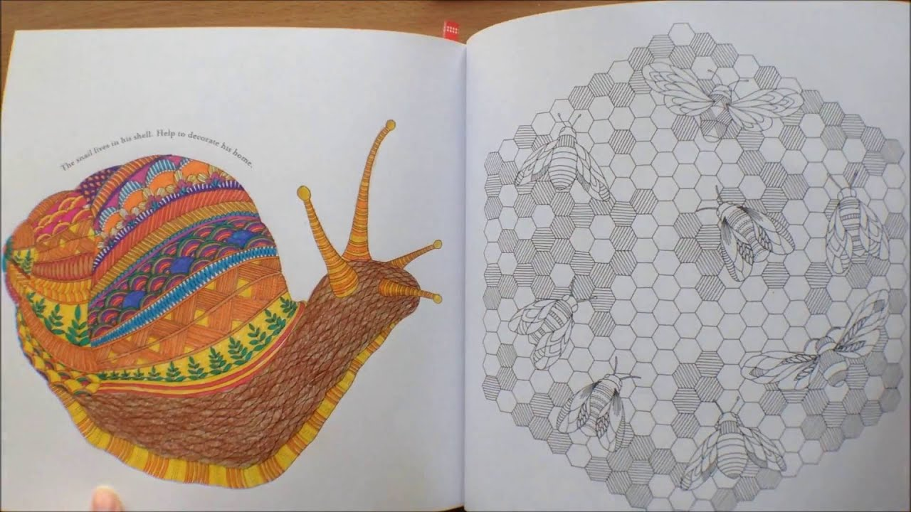 Animal Kingdom By Millie Marotta Colouring Book Flipthrough