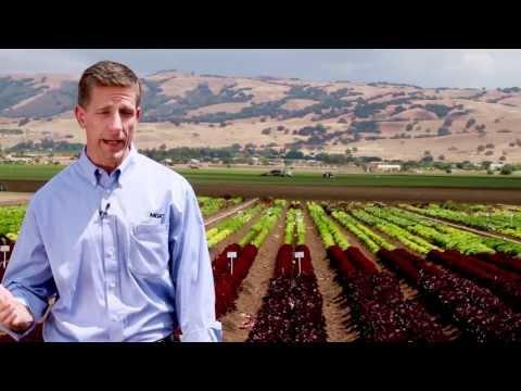 Organic Sector Growing