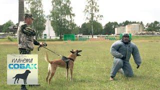 Пограничные собаки. Планета собак 🌏 Моя Планета