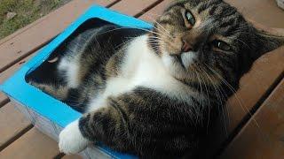 Прикольные домашние кошки свежие приколы