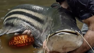 Breaking The Tapah Curse - River Monsters