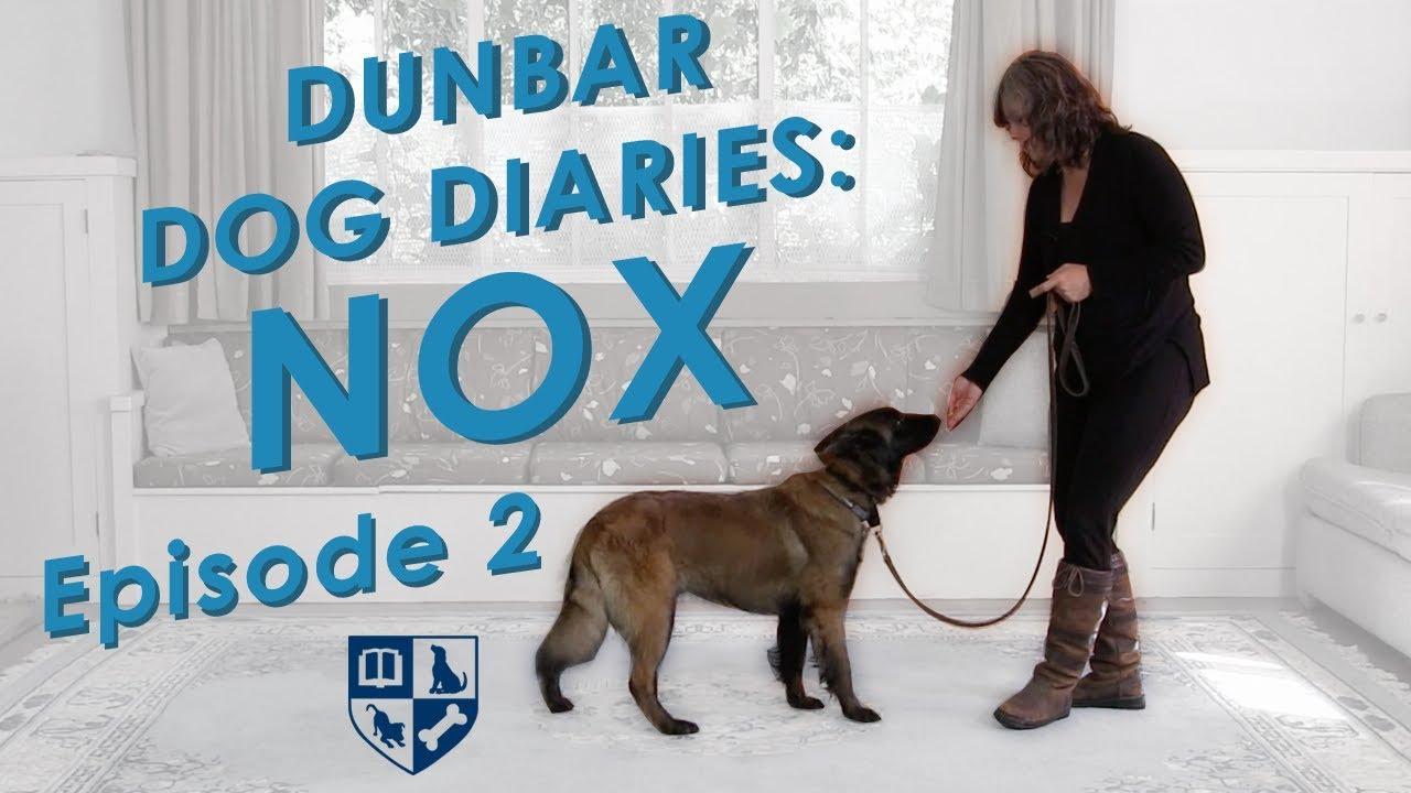 Dunbar Dog Diaries 2 Verbal Reward Markers