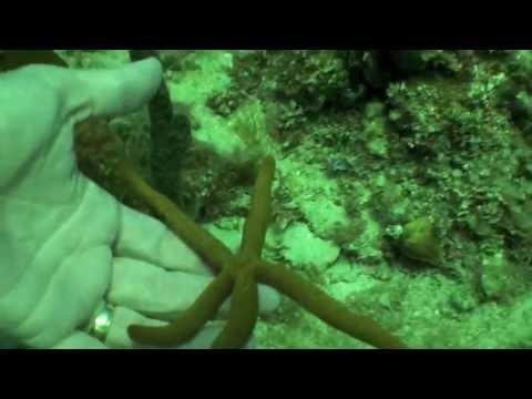 Jamaica Sea Life