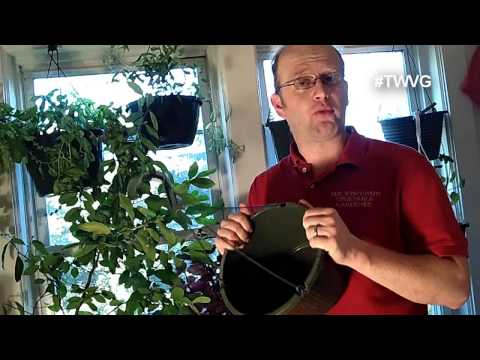 Growing Herbs Indoors – Growing in Containers