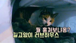 야채파는 할머니와 길고양이 23탄 (부제: 냥이는 스티로폼집에서 뭘할까?)