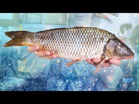 Вопрос: В каких регионах, реках РФ речная рыба содержит ртуть?