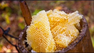 Бортевое пчеловодство в деревне//Переезд в деревню