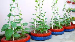 Recicle Pneus Velhos Para Plantar Verduras e Legumes Em sua Casa
