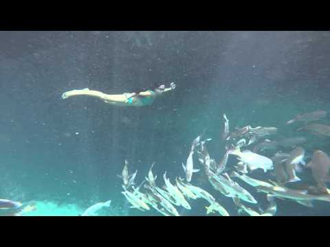 Enchanted River (swim with the fishIII)